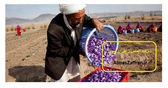 قیمت خرید زعفران افغانستان