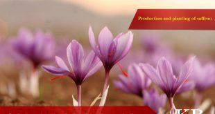 قیمت انواع زعفران امروز چند است؟نمودار قیمت زعفران صادراتی و قیمت فروش زعفران در بازار